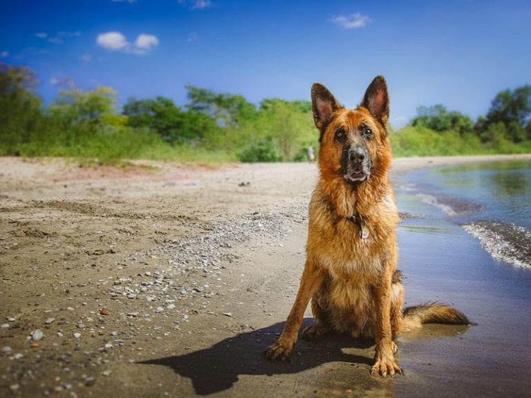 consejos-verano-mascotas