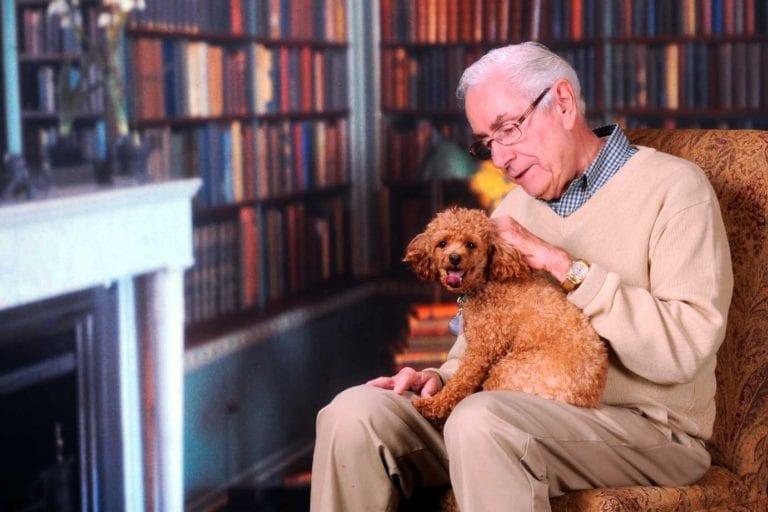 geriatrica-mascotas-perro-veterinario