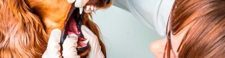 higiene-bucal-blog