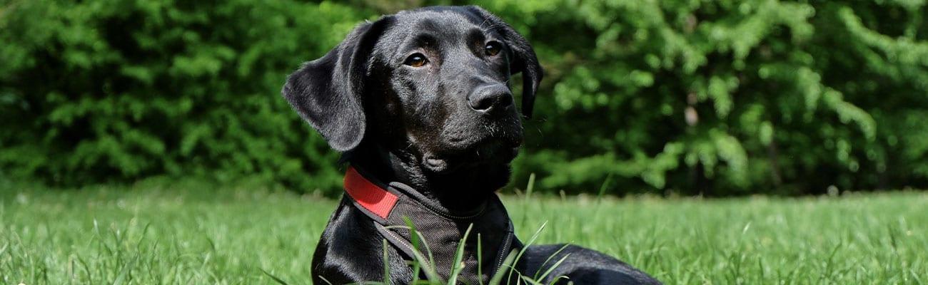 parasitos-perro-veterinario