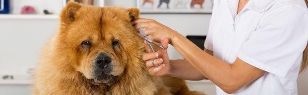 Cures bàsiques per al pèl de la teva mascota