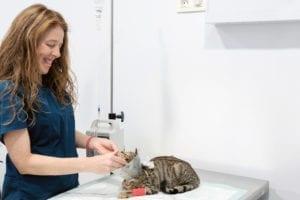 medicina-interna-servicios-veterinario