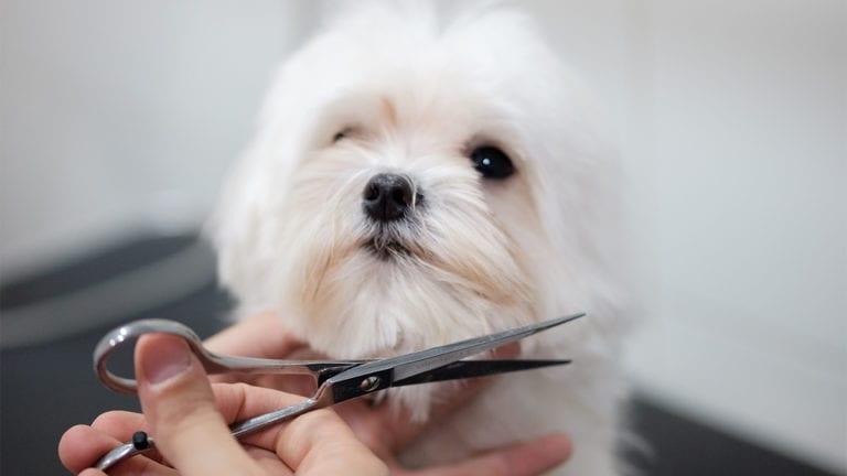 peluqueria-veterinario1