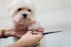 peluqueria-veterinario2