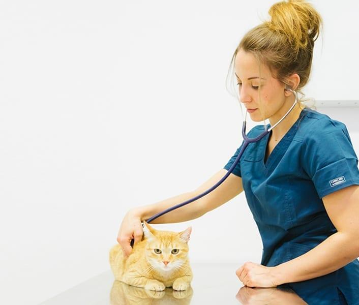 equipo-veterinario