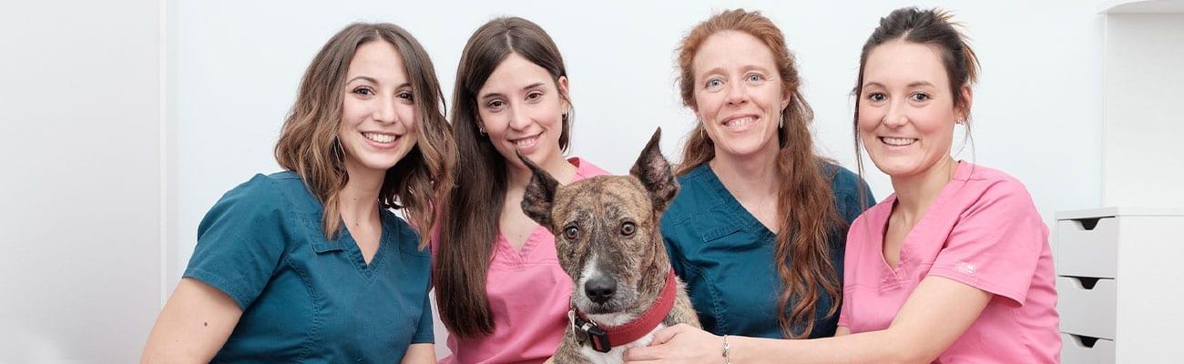 quienes-somos-veterinario-entremaliats
