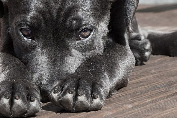 adopta-veterinario