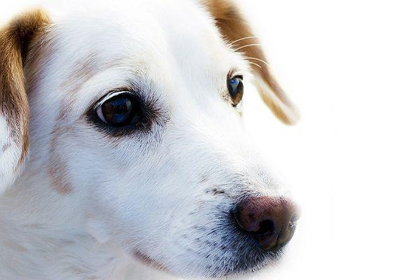 geriatria-veterinario