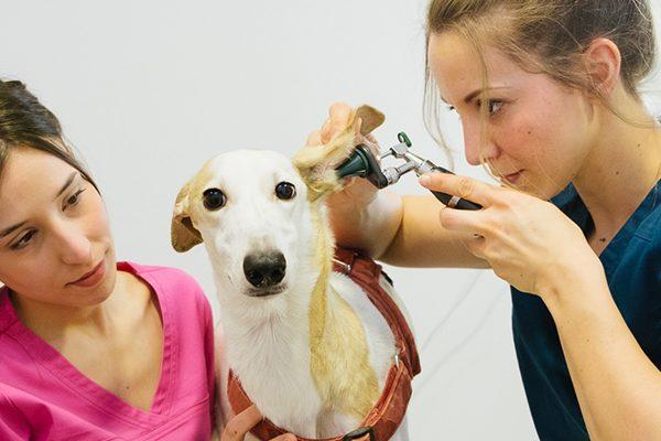 medicina-preventiva-veterinario
