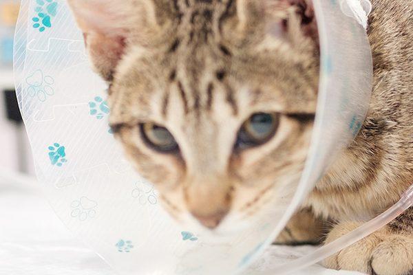 oncologia-veterinario